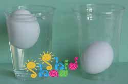 تخم-مرغ-شناور