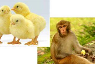 واحد کار حیوانات
