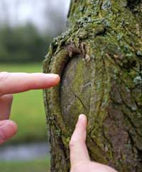 Tree-Rings-how-old-is-a-tree
